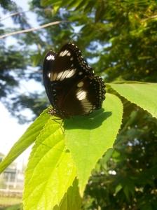 Banyak kupu2 liar cantik
